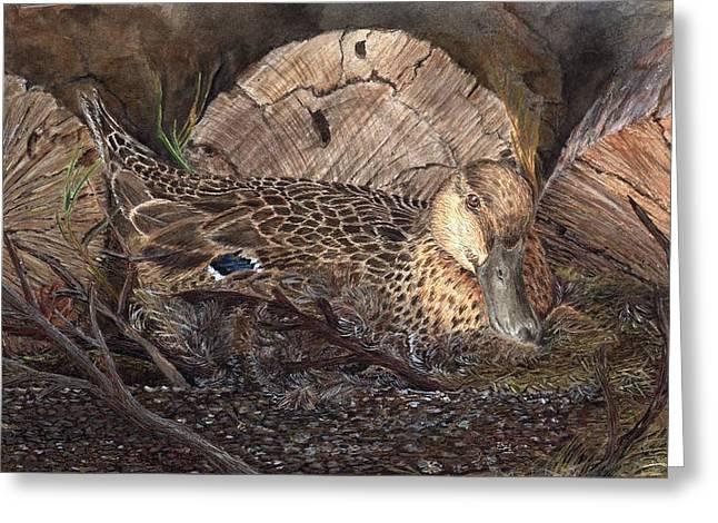 Mallard Drawings Greeting Cards - Mallard on Nest Greeting Card by Dana Spring Parish