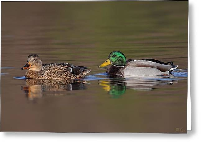 Michigan Pyrography Greeting Cards - Mallard Pair Greeting Card by Daniel Behm