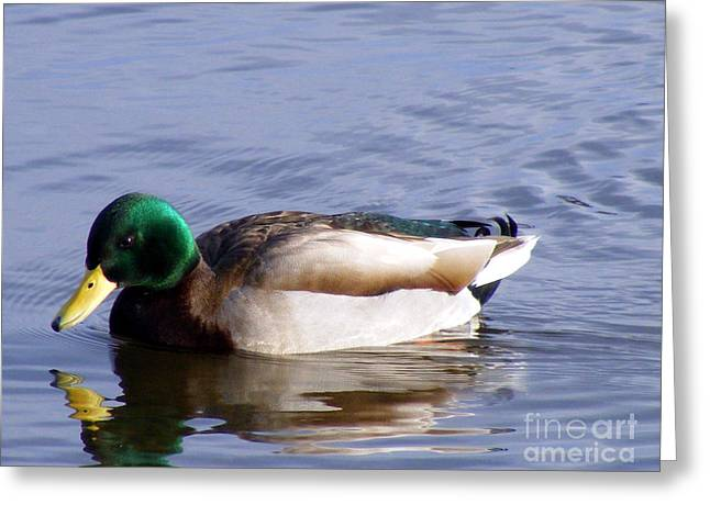 Green Barbara Griffin Art Greeting Cards - Mallard Reflection Greeting Card by Barbara Griffin