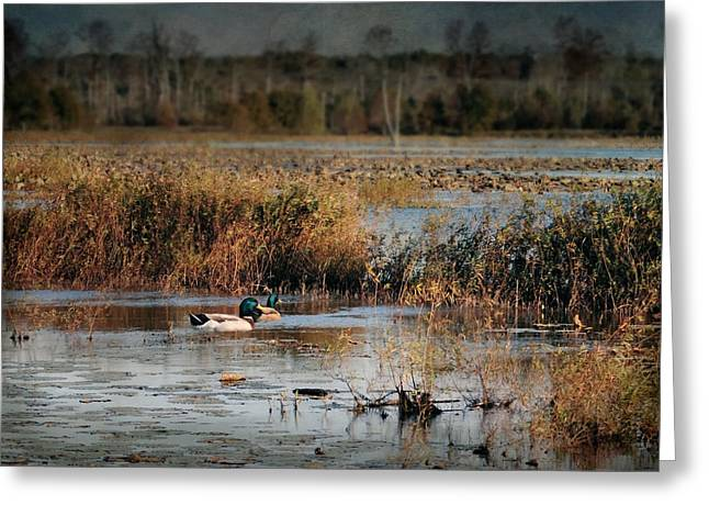 Ducks Lakes Greeting Cards - Mallards in the Swamp Greeting Card by Jai Johnson