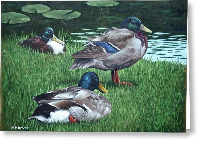 Mallards Greeting Cards - Mallards On River Bank Greeting Card by Martin Davey