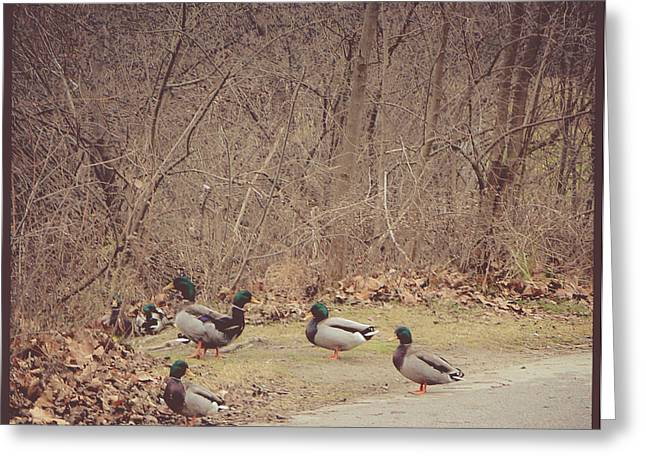 Winter Photos Mixed Media Greeting Cards - Malllard Ducks Greeting Card by Connie Dye