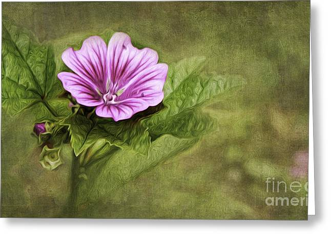 Mallow Greeting Cards - Mallow Hollyhock Greeting Card by Lena Auxier
