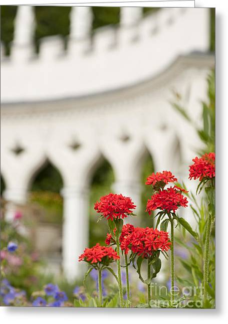 Maltese Photographs Greeting Cards - Maltese Cross Flowers Greeting Card by Anne Gilbert