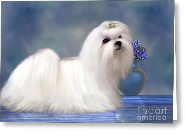 Living Beings Greeting Cards - Maltese Dog Greeting Card by Corey Ford