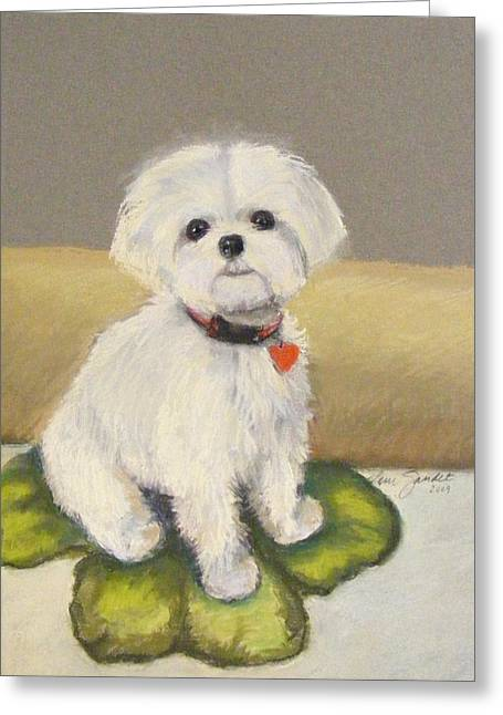Small Dog Pastels Greeting Cards - Maltese Jeeter Greeting Card by Lenore Gaudet