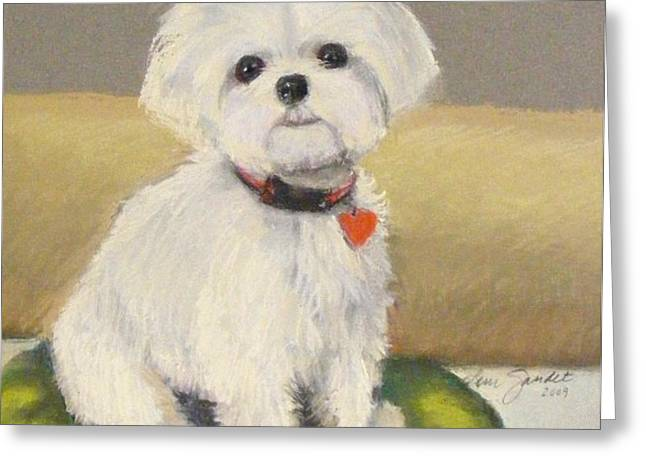 Maltese Jeeter Greeting Card by Lenore Gaudet