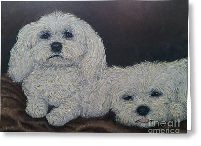Toy Maltese Greeting Cards - Malteses Greeting Card by Ana Marusich-Zanor