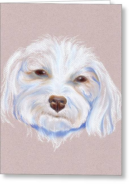 Small Dog Pastels Greeting Cards - Maltipoo with an Attitude Greeting Card by MM Anderson
