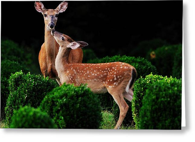 Mama And Her Fawn Greeting Card by Angel Cher