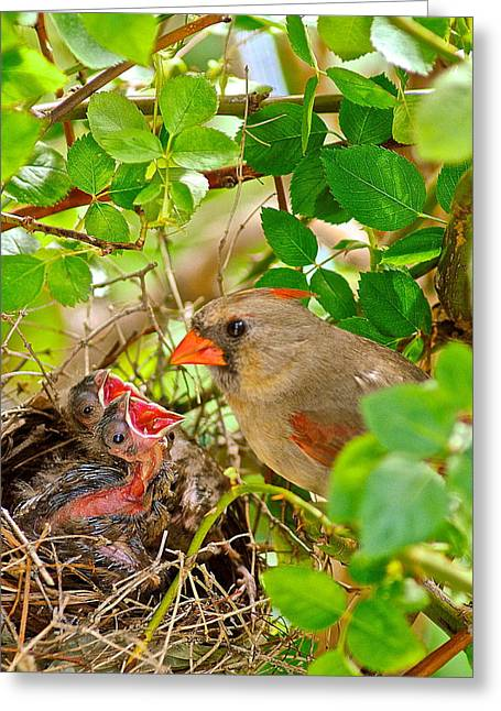 Naturaleza Greeting Cards - Mama Bird Greeting Card by Frozen in Time Fine Art Photography