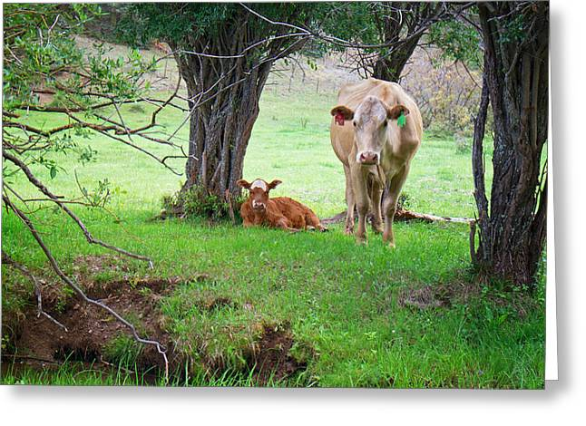 Mama Cow And Calf Greeting Card by Mary Lee Dereske