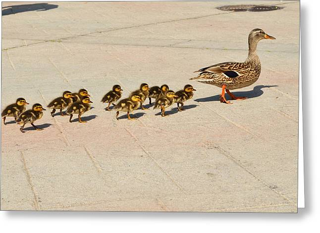 Baby Mallards Digital Art Greeting Cards - Mama Duck and Eleven Ducklings Greeting Card by Eva Kaufman