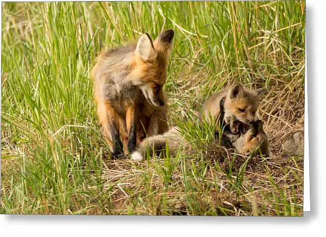 Natural Focal Point Photography Greeting Cards - Mama Fox and Kits 2 Greeting Card by Natural Focal Point Photography