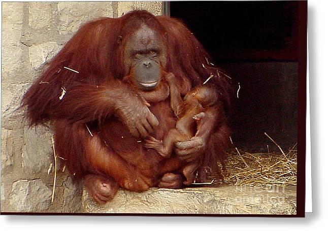Mama N Baby Orangutan - 54 Greeting Card by Gary Gingrich Galleries