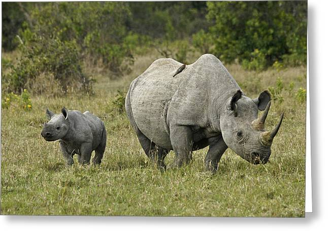 Sweetwater Greeting Cards - Mama Rhino and Mini Me Greeting Card by Michele Burgess