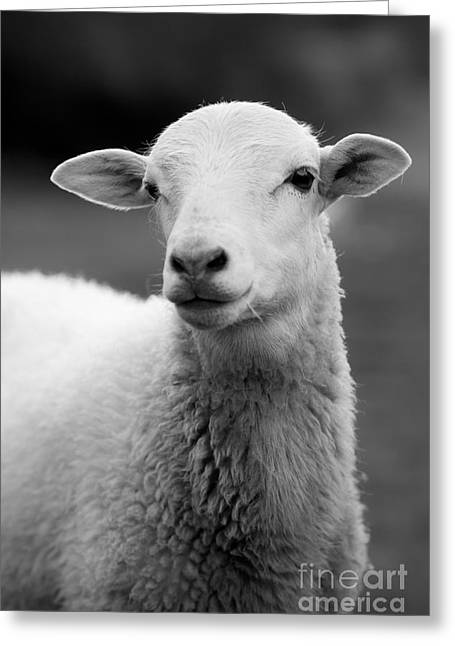 White Sheep Greeting Cards - Mama Sheep Greeting Card by Lucid Mood
