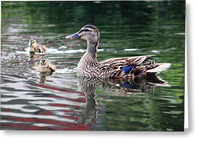 Ducklings Digital Greeting Cards - Mamas Watchful Eye Greeting Card by Suzanne Gaff