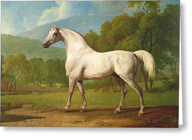 Race Horse Greeting Cards - Mambrino, C.1790 Greeting Card by George Stubbs