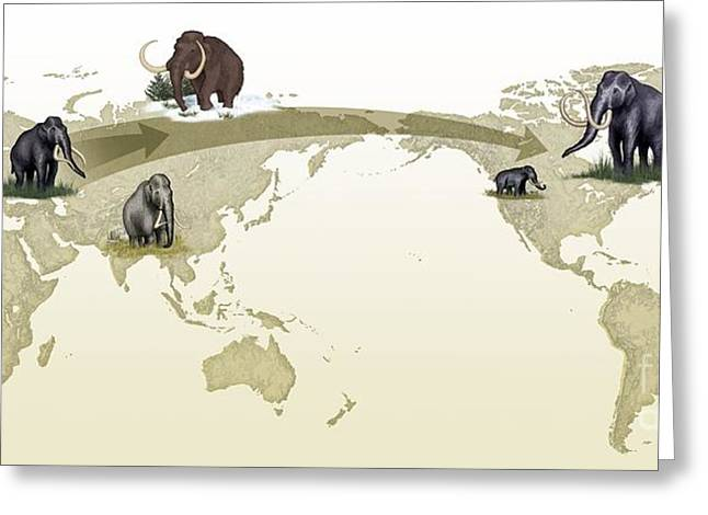 Mammoth Evolutionary Migration Greeting Card by Spl
