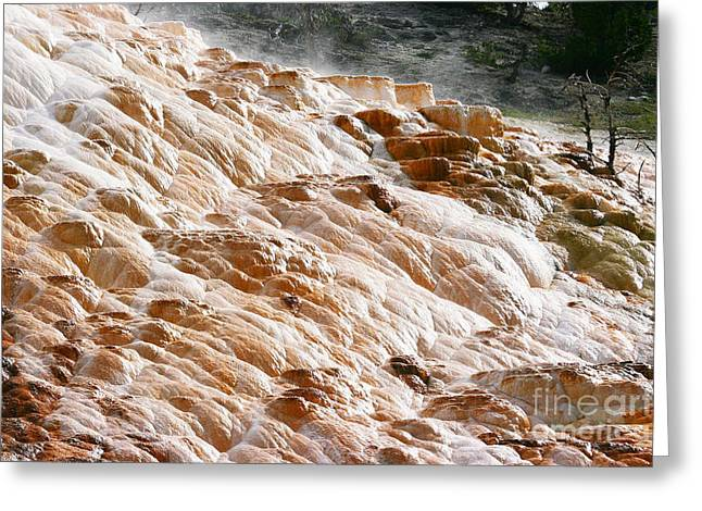 Mammoth Hot Springs Seven Greeting Card by Donald Sewell