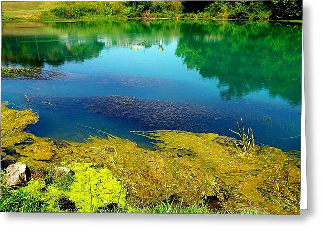 Company Is Coming Greeting Cards - Mammoth Springs Water Vegetation Greeting Card by Cindy Croal