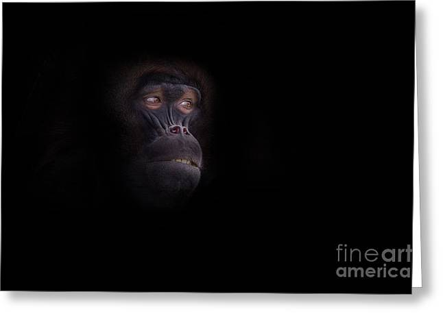 Missing Teeth Greeting Cards - Man in The Mask Greeting Card by Ashley Vincent