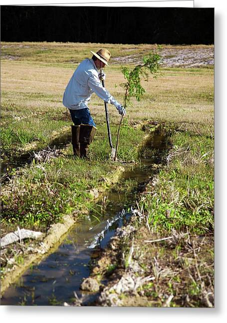 Man Planting A Cypress Tree Greeting Card by Jim West