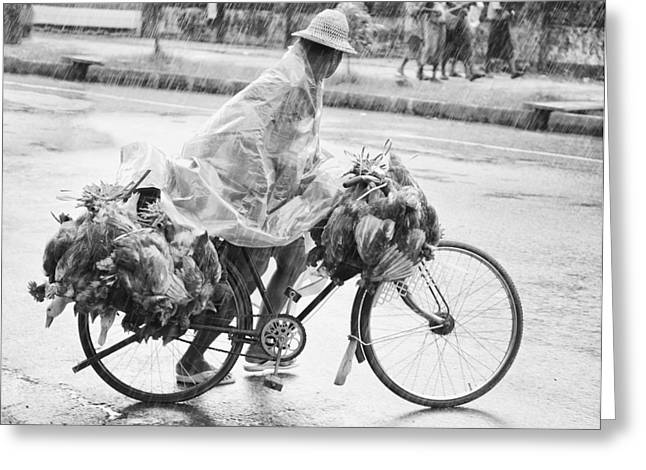 Dead Chickens Greeting Cards - Man Riding Bicycle Carrying Chickens Greeting Card by Stuart Corlett