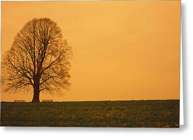 Bare Trees Greeting Cards - Man Standing With An Umbrella Greeting Card by Panoramic Images