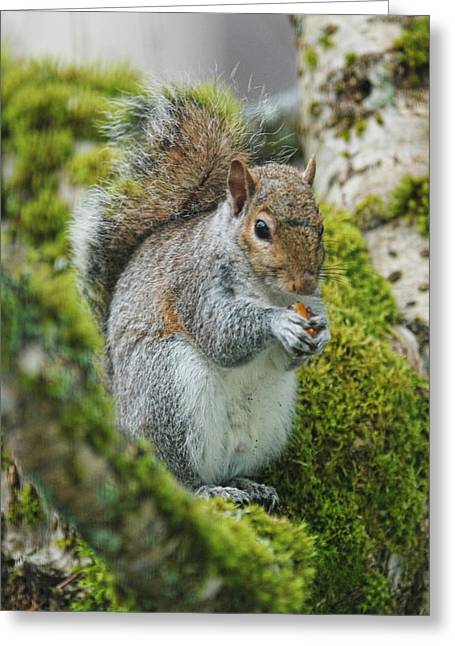Sciurus Carolinensis Greeting Cards - Man this is good Greeting Card by Ron Roberts