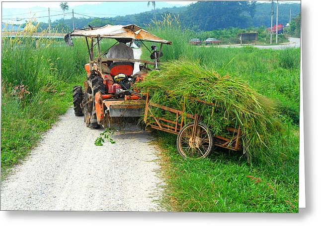 Scenes Greeting Cards - Man Working at Paddy Field  Greeting Card by Francis Tan