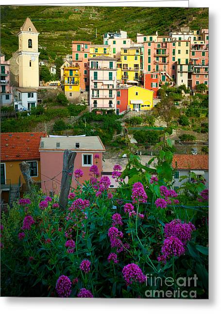 Cramped Greeting Cards - Manarola Flowers and Houses Greeting Card by Inge Johnsson