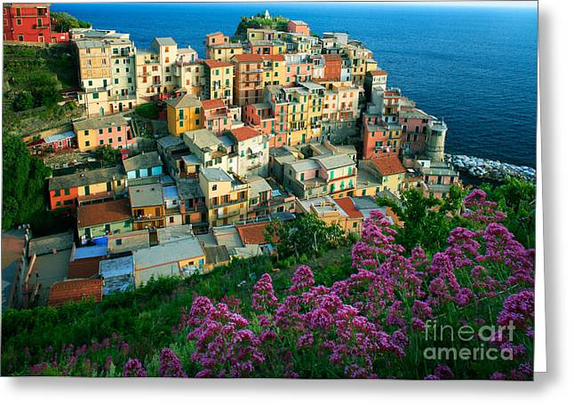 Cramped Greeting Cards - Manarola from above Greeting Card by Inge Johnsson