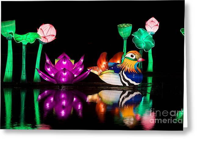 Good Luck Greeting Cards - Mandarin duck Chinese Lantern Greeting Card by Tim Gainey