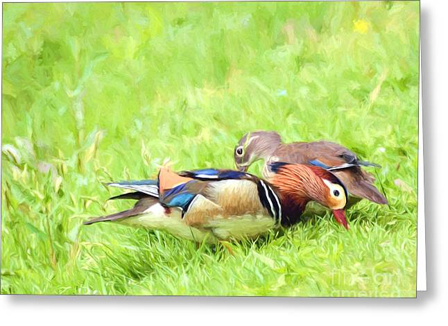 Recently Sold -  - Water Fowl Greeting Cards - Mandarin Duck Couple Greeting Card by Kerri Farley