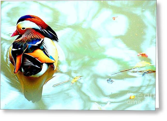 Mandarin Duck Resting II Greeting Card by C Lythgo