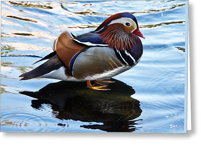 Haybales Greeting Cards - Mandarin Duck Greeting Card by Robert Bales