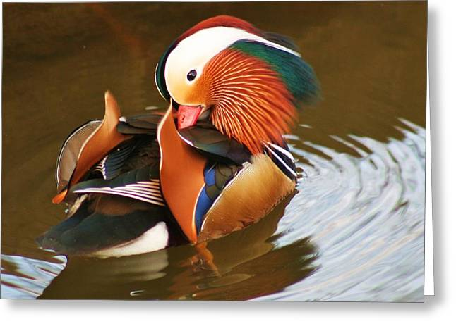 Close-up Pyrography Greeting Cards - Mandarin Duck Greeting Card by Valia Bradshaw