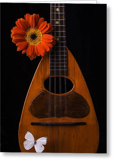 Mandolin Greeting Cards - Mandolin With White Butterly Greeting Card by Garry Gay