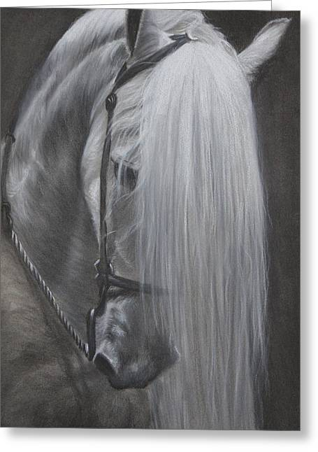 Charcoal Drawing Of Pets Greeting Cards - Mane Attraction Greeting Card by David Gage