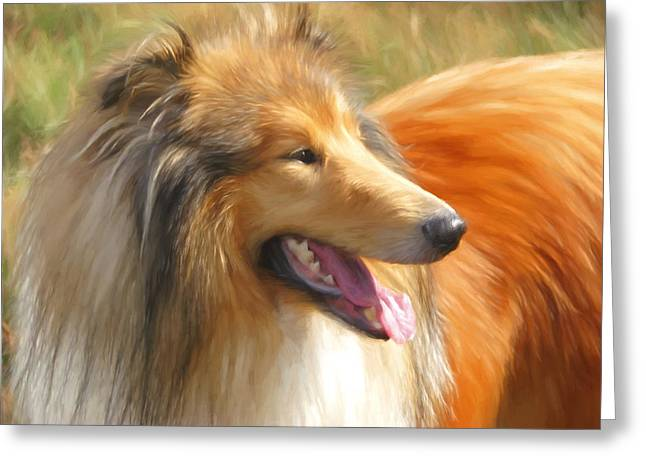 Collie Greeting Cards - Maned Collie Greeting Card by Daniel Hagerman
