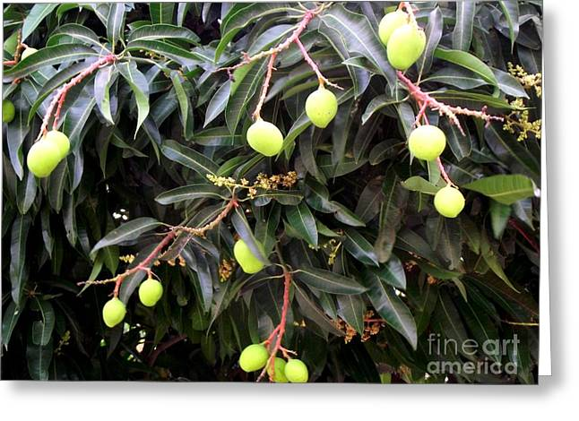 Mango Greeting Cards - Mango Mango Greeting Card by Jayne Kerr