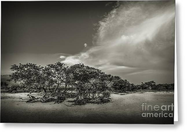 Thunder Cloud Greeting Cards - Mangrove at Low Tide Greeting Card by Marvin Spates