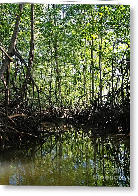 Mangrove Forest Greeting Cards - mangrove forest in Costa Rica 2 Greeting Card by Rudi Prott