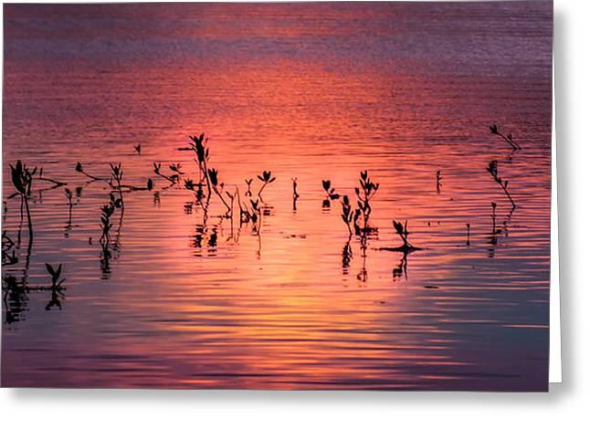 Enhanced Greeting Cards - Mangrove Paradise Greeting Card by Karen Wiles