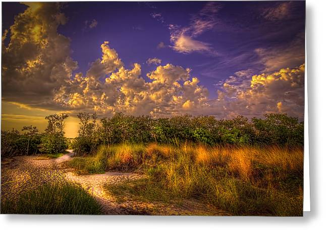 Tampa Bay Florida Greeting Cards - Mangrove Path Greeting Card by Marvin Spates