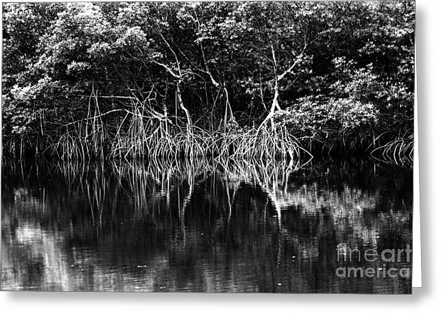St Petersburg Florida Greeting Cards - Mangrove Reflections Greeting Card by Thomas Levine