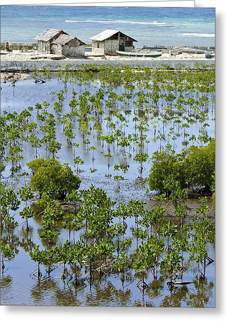 Rehabilitation Greeting Cards - Mangrove rehabilitation, Indonesia Greeting Card by Science Photo Library