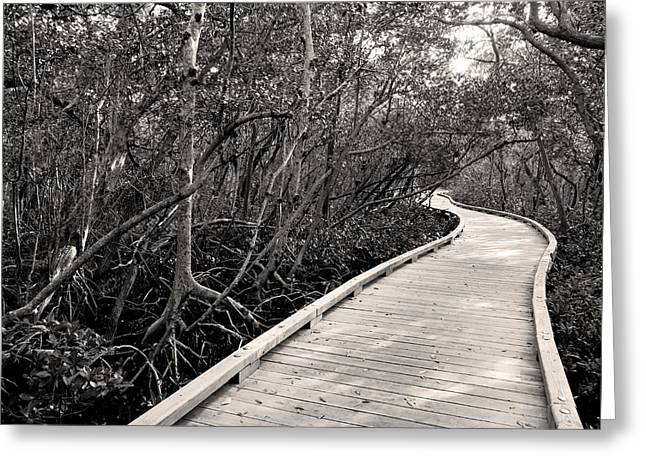 Mangrove Forest Greeting Cards - Mangrove Stroll in Sepia Greeting Card by Jean Macaluso